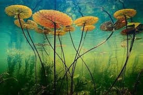Classiv science adaptation plants terrestrial marshes for Underwater pond plants
